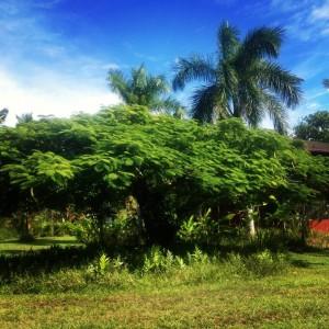mindfulness tree